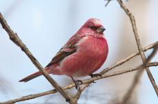 料理写真 2ページ目 : 赤い鳥 JR名駅店 (あかいと …